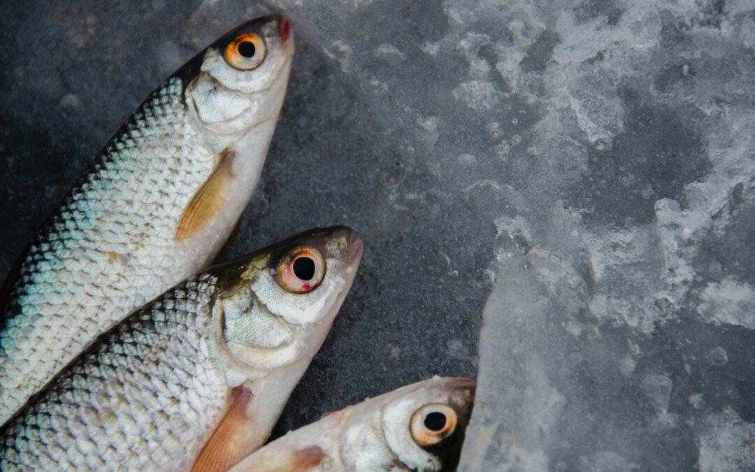 »Ab der Fisch«